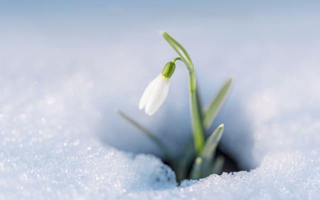 Fleur dans la neige