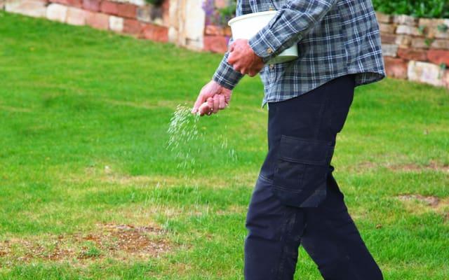 Saatgut und Dünger auf dem Rasen verteilen
